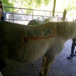 Die Reitkinder haben die Ponys angemalt. Katja wird 50!