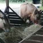 Moritz und Paul - gerade erst kennengelernt und schon allerbeste Freunde :-)