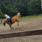 Unsere Ponies sind immer, wirklich immer, gelassen und entspannt ;-)!!