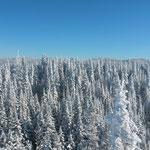 Fôret Canadienne - Janvier 2016