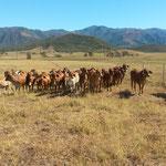 Visite d'une station d'élevage
