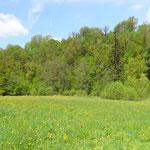 Zwettltal mit Schlucht- und Hangmischwald im Hintergrund.