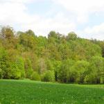 Zwettltal mit Schlucht- und Hangmischwald im Hintergrund (Lizenz: Pierre Vérité, CC BY-SA 3.0).