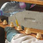 Humidifier les cupules avec de l'eau (pas d'eau du robinet).