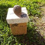 upcycling.MAUS.Box mit schwarzen Mäusen und Knauf aus eigenes entwickelter Formmasse