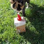 Katze Feli hinter upcycling.MAUS.Box