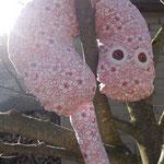 Nackenhörnchen kraxelt auf dem Baum, Unterseite: Jeansstoff