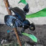 Magnet-Käfer