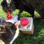 Feli und Lecki begutachten die upcycling.Boxen