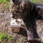 Leckerschlecker mit Box