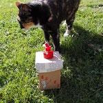Katze Felicitas guckt weg