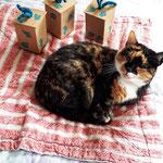 3. Runde BOXenKAMPF: noch mal Feli mit den neuen Mausboxen