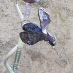 Magnetischer Käfer