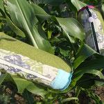 ohne Mais kein Preis: 2 Flaschenhüllen, Grün-Türkis und Grün-Pink-Violett kombiniert mit Blumenstoff