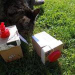 Leckerschlecker bringt im Überschwang gleich mal eine Box zum Fallen