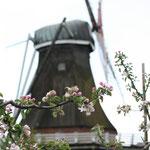 Mühle im Alten Land
