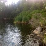 petite ile flottante de roseaux