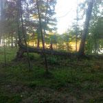 hier, cet arbre n'était pas à l'horizontale
