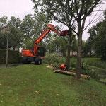 Kraan bomen