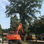 Mobiele kraan boom rooien
