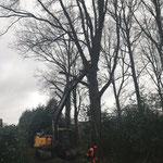 Bomen rooien