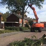 Boom kappen in woonwijk
