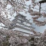 日本旅游攻略,ALEXANDER-2020年东京奥运会,JAPAN,日本第一酵素,ALEXANDER&SUN,纳豆精,纳豆激酶日本旅游指南,-爱知