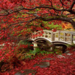 日本旅游攻略,ALEXANDER-2020年东京奥运会,JAPAN,日本第一酵素,ALEXANDER&SUN,纳豆精,纳豆激酶日本旅游指南,-日本庭园