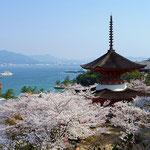日本旅游攻略,ALEXANDER-2020年东京奥运会,JAPAN,日本第一酵素,ALEXANDER&SUN,纳豆精,纳豆激酶日本旅游指南,-京都