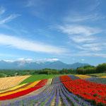 日本旅游攻略,ALEXANDER-2020年东京奥运会,JAPAN,日本第一酵素,ALEXANDER&SUN,纳豆精,纳豆激酶日本旅游指南,-北海道