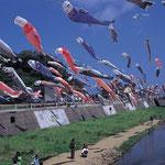 日本旅游攻略,ALEXANDER-2020年东京奥运会,JAPAN,日本第一酵素,ALEXANDER&SUN,纳豆精,纳豆激酶日本旅游指南,-日本文化,大谷川鲤鱼