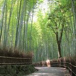 日本旅游攻略,ALEXANDER-2020年东京奥运会,JAPAN,日本第一酵素,ALEXANDER&SUN,纳豆精,纳豆激酶日本旅游指南,-京都竹林