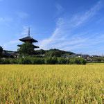日本旅游攻略,ALEXANDER-2020年东京奥运会,JAPAN,日本第一酵素,ALEXANDER&SUN,纳豆精,纳豆激酶日本旅游指南,-田园风景风光,三重塔