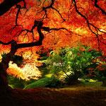 日本旅游攻略,ALEXANDER-2020年东京奥运会,JAPAN,日本第一酵素,ALEXANDER&SUN,纳豆精,纳豆激酶日本旅游指南,-日本美景,枫叶,红叶