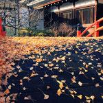 日本旅游攻略,ALEXANDER-2020年东京奥运会,JAPAN,日本第一酵素,ALEXANDER&SUN,纳豆精,纳豆激酶日本旅游指南,-kamo-shrine