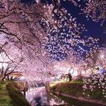 日本旅游攻略,ALEXANDER-2020年东京奥运会,JAPAN,日本第一酵素,ALEXANDER&SUN,纳豆精,纳豆激酶日本旅游指南,-樱花,赏樱