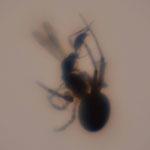 Die Spinne bereitet ihr Mahl vor.