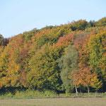 So schön bunt kann der Herbst im Grafenberger Wald sein.