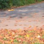 ... irgendwie fliegen sie meist zu schnell für meine Kamera oder ich bin zu langsam, aber diesmal nicht!!!!