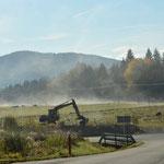 ... denn Nebel ist im bayrischen Wald nicht selten.