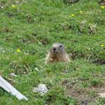 Foto: Arjan de Kreek _____    -     Und ewig grüßt das Murmeltier