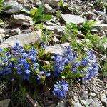 Foto: Arjan de Kreek_____    -      Blumen am Wegesrand