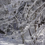 Foto: Helmut Warta                                                                                        Winter im Kleinwalsertal