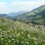 Foto: Arjan de Kreek _____    -     ein bunter Blumenstrauss