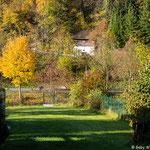 Unser Garten - deutlich bunter...