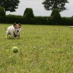 Happy und der Ball - tolle Bilder !