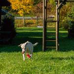 Paula spielt im Garten