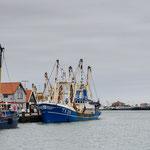 Hafen von Oudeschild