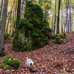 Wanderung ab Großenlohe