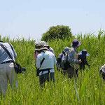 草地で植物観察
